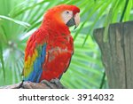 a colorful macaw perched on a... | Shutterstock . vector #3914032