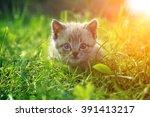 Stock photo kitten on grass close up 391413217
