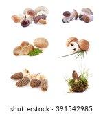mushrooms     morchella ... | Shutterstock . vector #391542985