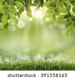 fresh spring bokeh background  | Shutterstock . vector #391558165