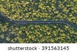 the great open road | Shutterstock . vector #391563145