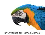 macaw parrot isolated on white... | Shutterstock . vector #391625911