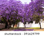 Street Of Beautiful Violet...