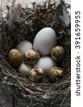 quail eggs in a nest on wooden... | Shutterstock . vector #391659955