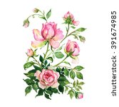 watercolor a bouquet of roses... | Shutterstock . vector #391674985