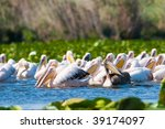 american white pelican on water | Shutterstock . vector #39174097