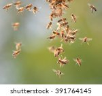 closeup of bees flying in apiary | Shutterstock . vector #391764145