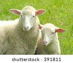 sheep | Shutterstock . vector #391811