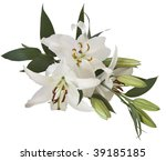 lily isolated  with clipping... | Shutterstock . vector #39185185