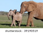 African Elephant Mother...
