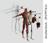 human anatomy exploded view ... | Shutterstock . vector #391997611
