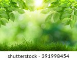 eco nature   green and blue... | Shutterstock . vector #391998454