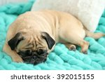 Pug Dog Lying On Blanket
