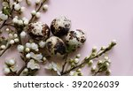 quail eggs | Shutterstock . vector #392026039