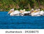 american white pelican on water | Shutterstock . vector #39208075