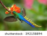 violet tailed sylph ... | Shutterstock . vector #392158894