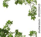 green leaf frame isolated | Shutterstock . vector #392220415