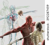 human anatomy exploded view ... | Shutterstock . vector #392287459