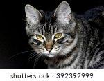 kitten portrait | Shutterstock . vector #392392999