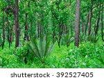 trees  forests  fertile   Shutterstock . vector #392527405