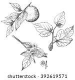 set of hand drawn plants... | Shutterstock .eps vector #392619571