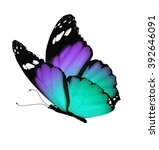 Stock photo color butterfly isolated on white 392646091