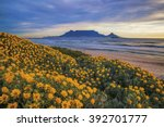 table mountain. during spring... | Shutterstock . vector #392701777