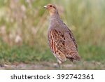 wild bird on the road ... | Shutterstock . vector #392742361