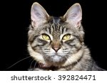 beautiful cat portrait | Shutterstock . vector #392824471