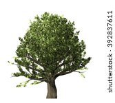 oak tree isolated on white... | Shutterstock . vector #392837611