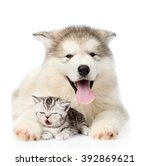 Stock photo dog and cat lying together isolated on white background 392869621