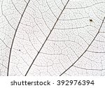 leaf veins | Shutterstock . vector #392976394