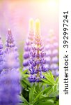 blue wild growing flowers of a... | Shutterstock . vector #392997241