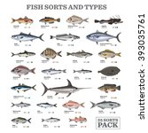 twenty five different fish... | Shutterstock .eps vector #393035761