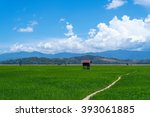 paddy field at a rural area... | Shutterstock . vector #393061885