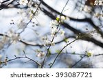 blooming tree branches with... | Shutterstock . vector #393087721