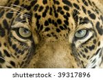 Close Up Full Frame Penetratin...