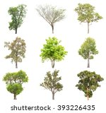 collection of isolated tree on... | Shutterstock . vector #393226435