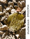 fallen leaf with water drops   Shutterstock . vector #39322954