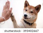 Cute Japanese Dog Give Hi Five...