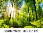 Small photo of Scenic forest of fresh green deciduous trees framed by leaves, with the sun casting its warm rays through the foliage