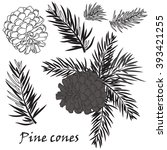 Fir Tree Branches With Pine...
