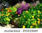 Flowerbed With Lobelia And...
