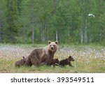 female brown bear with three... | Shutterstock . vector #393549511