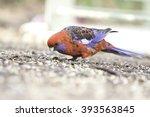 Parrots Australia. The State O...