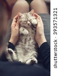 Stock photo kitten in the hands of the owner 393571321