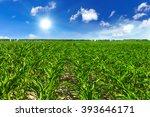 field - stock photo