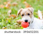 Stock photo cute fluffy dog waiting to play with toy at walk 393652201