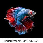 betta fish  siamese fighting... | Shutterstock . vector #393732661