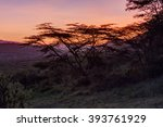 Acacia Tree On Slope Against...